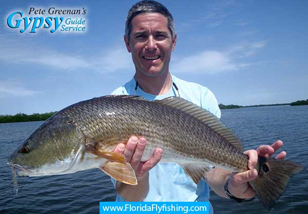 Redfish caught flyfishing in Boca Grande, Florida with Capt. Pete Greenan, fly fishing guide