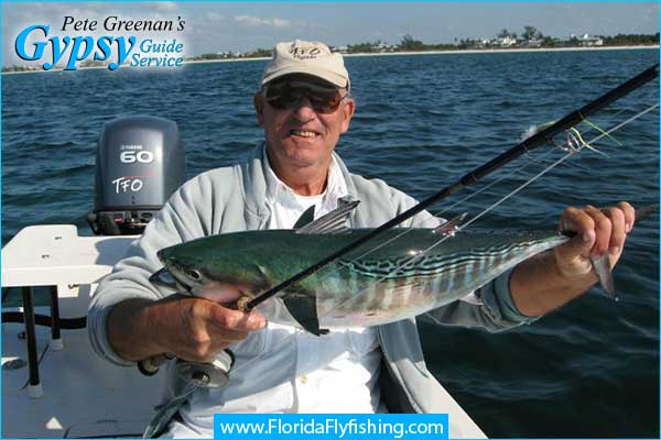 Bonito caught fly fishing in Boca Grande, Florida with flyfishing charter guide Pete Greenan