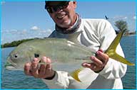 Jack Crevalle - a species of Gulf Coast fish